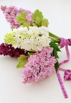 Bouquet of lilacs tied with ribbon