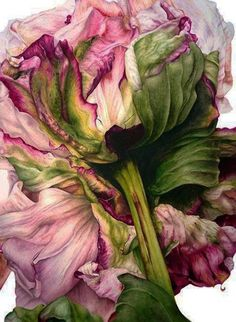 Simply gorgeous watercolor of a peony flower