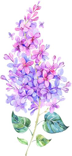 ideas for tattoo watercolor bird colour Realistic Flower Drawing, Simple Flower Drawing, Easy Flower Drawings, Beautiful Flower Drawings, Bird Drawings, Drawing Flowers, Beautiful Pictures, Delphinium Tattoo, Delphinium Bouquet