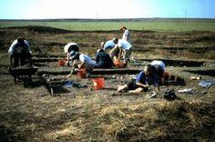 Volunteer-Digs
