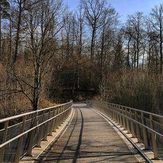 """163 Likes, 1 Comments - Anupama Hegde (@anupama1990) on Instagram: """"#shotoniphone7plus #iphoneography #walkonthebridge #evening #sunset #forest #lake #springtime…"""""""