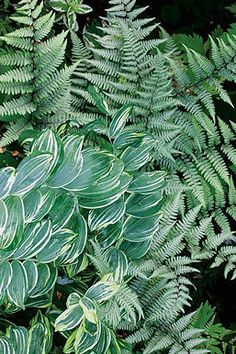 Ghost fern and Solomon's Seal