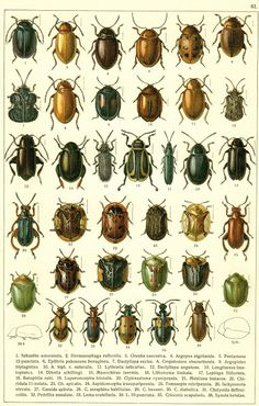 More Beetles — for personal use only!