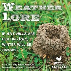 Wonder how true this will holdup to be? Old Wives Tale, Wives Tales, Flower Meanings, Color Meanings, Weather Predictions, Weather Forecast, Men Spa, Willow Springs, Old Farmers Almanac