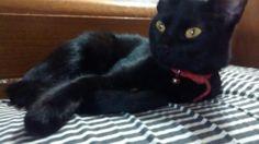 Morita luciendo sus bellos ojos dorados... Cute Black Cats, Animals, Gold Eyes, Dogs, Gatos, Animales, Animaux, Animal, Animais