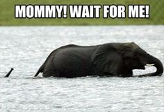 It took me a second to realize that the baby elephant was the little trunk sticking out of the water hahaha!
