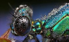 insects after rain