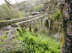 Santa Cristina, Vineyard, Outdoor, Wooden Walkways, 12th Century, Trekking, Waterfalls, Paths, Woods