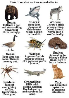How To Survive Animal Attacks http://ibeebz.com