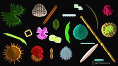 Diatomeas, organismos determinantes para el clima global: investigadora de la UASLP
