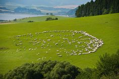 beautiful Liptov nature (Slovakia) and herd of sheep Heart Of Europe, Central Europe, Bratislava, Interesting History, Land Art, Heritage Site, Natural World, Czech Republic, Homeland