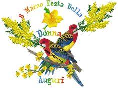 Mimosa_Auguri_festa_della_Donna