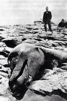 Picture taken of a dead creature that washed up on the coast of California.  The thing had a neck 20ft long  4 flippers.