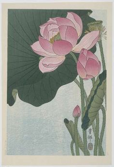 'Lotus Flower - Japanese Block Print' Art Print by fineearth Flowering lotus flowers, Ohara Koson, 1920 1930 / Japanese Woodcut Millions of unique designs by independent artists. Find your thing. Lotus Kunst, Lotus Art, Japanese Lotus, Japanese Flowers, Ohara Koson, Art Asiatique, Japanese Painting, Japanese Prints, Art And Illustration