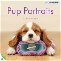 Pup Portraits Wall Calendar: These cute puppies portray a humorous look at what life would be like if puppies ruled the world. From taking a nap, all snuggled in bed, to hanging from the inside of a Christmas stocking, preparing for the Holidays, these puppies don't seem to disappoint.  http://www.calendars.com/dbs/Pup-Portraits-2013-Wall-Calendar/prod201300011781/?categoryId=cat00188_vc=DBSPDPZ1=1=DBSPDPZ1