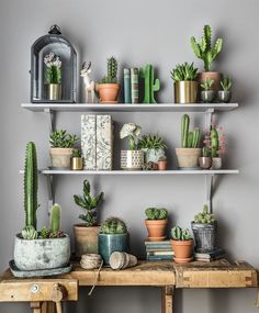 Kaktusen har snabbt blitvit ett superhett inslag i våra hem. Växten har tidgare mest har varit populär hos yngre killar och män, men nu börjar allt fler att förstå hur dekorativa och lättskötta de är.