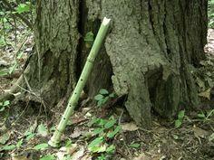 Bamboo Flute: End-blown Shakuhachi