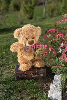 Tatty Teddy, Cuddle Quotes, Tedy Bear, Diy Flower Crown, Teddy Bear Pictures, Bunny And Bear, Bear Party, Cute Teddy Bears, Cute Toys