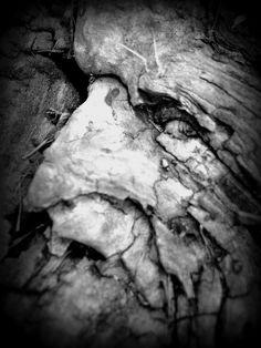 Hidden face in a stump