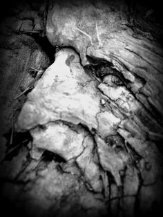 Hidden face in a stump If one just looks….