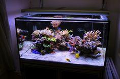 Aquascaping, Show your Skills. - Page 11 - Reef Central Online Community Home Aquarium, Aquarium Design, Reef Aquarium, Aquarium Ideas, Saltwater Aquarium Fish, Saltwater Tank, Aquariums, Nano Reef Tank, Reef Tanks