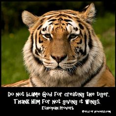 World of Proverbs - Famous Quotes: Do not blame God for having created the tiger, but...