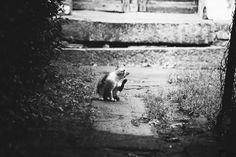 La beauté hypnotique des chats capturée dans de sublimes photos noir et blanc | Buzzly