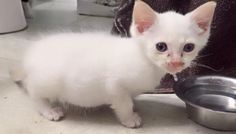 Tiny Kitten Rescued Off the Street, Feels Love for the First Time, The Difference in 2 Months