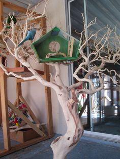 Manzanita Tree stand by Prego Dalliance Sanctuary                                                                                                                                                     More