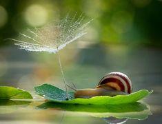 Charming snail scenes |