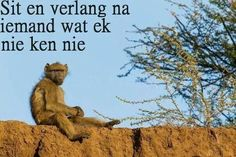 Afrikaans Ek het net so lekker gelag Hy lyk skoon depressief Funny Animals, Cute Animals, Enneagram 4, Afrikaanse Quotes, Proverbs Quotes, Funny Bunnies, Quotes And Notes, My Land, Animal Quotes