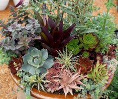 nice mix of succulents