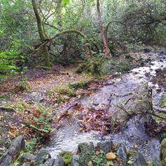 Kylemore Abbey's garden [2014]  #Ireland #travel #abbey #nature