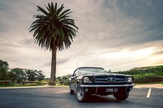 This is a pic of our beautiful #superbclassics #mustang Melbourne wedding car.  It was taken at a beautiful couple's wedding shoot on the Maribyrnong River.  We love the palm tree and sky ... and of course the stunning #blackmustang