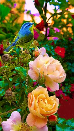 Animals Discover The Beauty of Flowers and Nature in Every Season Beautiful Rose Flowers, Most Beautiful Birds, Beautiful Flowers Wallpapers, Beautiful Nature Wallpaper, Exotic Flowers, Cute Birds, Pretty Birds, Exotic Birds, Colorful Birds