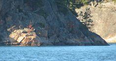 Kaasivuori Summer Photos, Archipelago, Sea, Island, Photo And Video, Videos, Water, Outdoor, Gripe Water