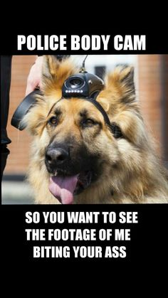 K-9....lol Hahaha, I would love to watch a douche bag get taken down