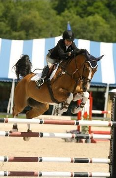 """""""Horseback riding isn't a sport."""" 