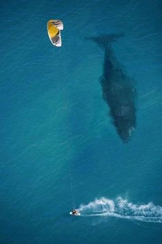 Kite Boarding over a whale.. Is this amazing or what? That would be surreal,