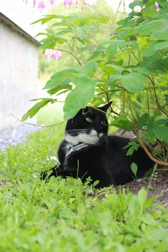 1000 Images About Plants SAFE For Cats On Pinterest For
