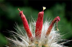 Kaktus - Jahreszeiten - Galerie - Community
