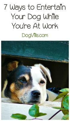 Looking for ways to keep your dog busy while you're at work? Check out our training tips and games!