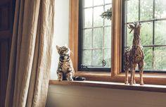 Yetişkin Kedi Sahiplenmek – Bana Alışır Mı?