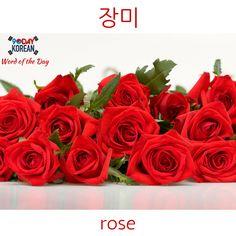 Today's Korean Word of the Day is 장미 (flower). #koreanwords #koreanlanguage #learnkorean