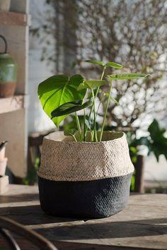 Flowerpot 'Vidar'  I  Zetas Trädgård