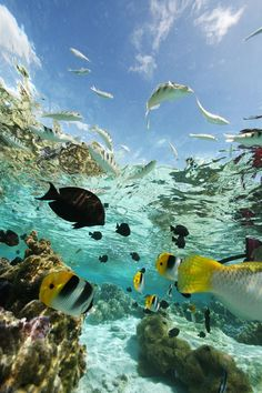 Beautiful and exotic places to visit - Maldives - aquatic animals Underwater Photography, Nature Photography, Photography Beach, Visit Maldives, Ocean Wallpaper, Underwater Life, Ocean Creatures, Beautiful Ocean, Sea And Ocean