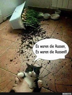 Best pictures, videos and sayings and there are t … – … - Katzen Tierischer Humor, Man Humor, Animals And Pets, Funny Animals, Cute Animals, Cat Memes, Funny Memes, Jokes, Funny Cats And Dogs