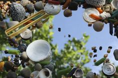 rocks, shells, corn kernels, coffee beans and dried pasta on a mirrored surface