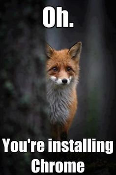 My friend sent me this knowing I love foxes. Now I just feel guilty... - hahaha.. then you should have watching the OPERA