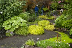 Portland - The Twombley Garden   Designed by Courtney Downing  The giant plant at the front is  a Farfugium. I love how they've contrasted the foliage textures, using hakonechloa as a foil to the larger foliage of Hostas, Ferns and Gunnera.